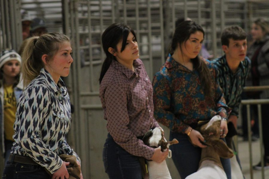 Analise+Porras+waits+with+her+goat+during+the+Wichita+County+Junior+Livestock+Show+in+January.+