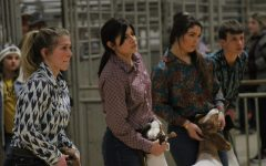 Analise Porras waits with her goat during the Wichita County Junior Livestock Show in January.
